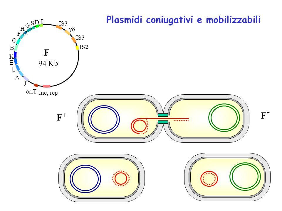 Plasmidi coniugativi e mobilizzabili