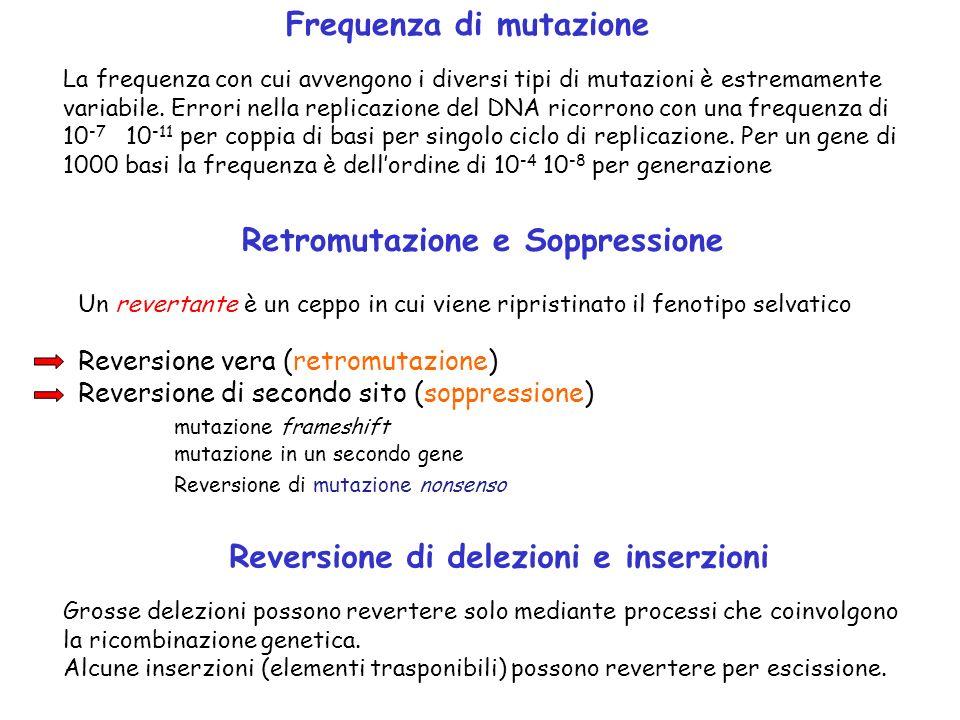 Frequenza di mutazione