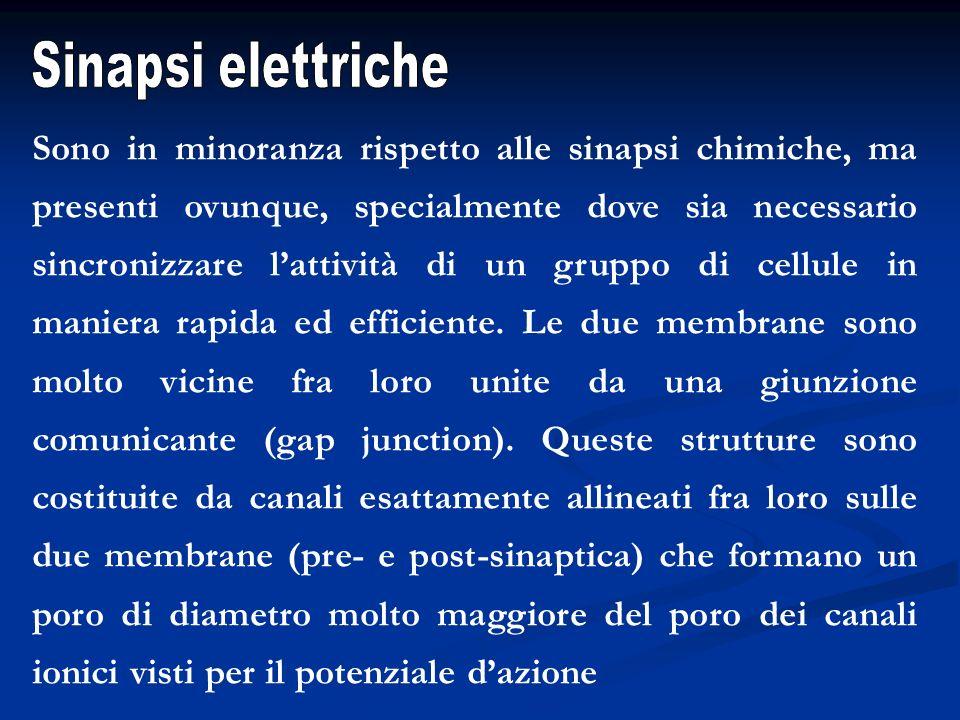 Sinapsi elettriche
