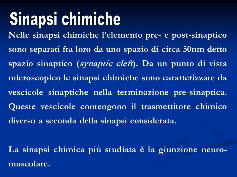 Sinapsi chimiche