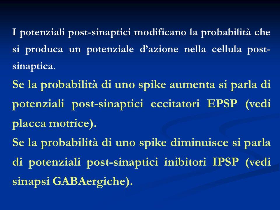 I potenziali post-sinaptici modificano la probabilità che si produca un potenziale d'azione nella cellula post-sinaptica.