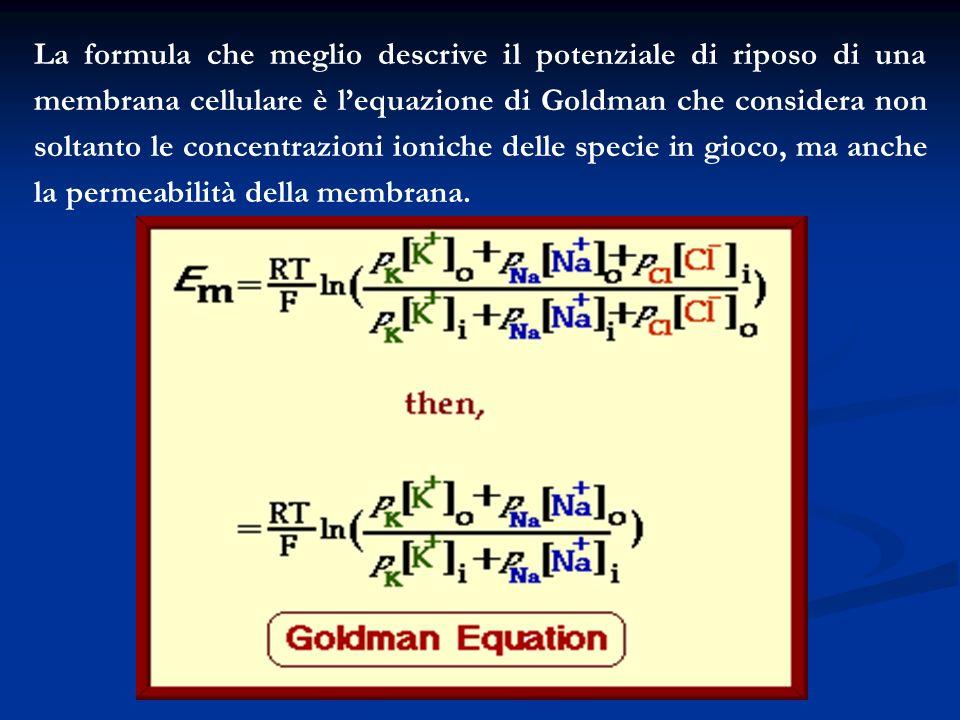 La formula che meglio descrive il potenziale di riposo di una membrana cellulare è l'equazione di Goldman che considera non soltanto le concentrazioni ioniche delle specie in gioco, ma anche la permeabilità della membrana.