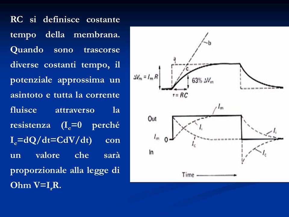 RC si definisce costante tempo della membrana