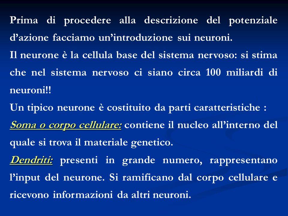 Prima di procedere alla descrizione del potenziale d'azione facciamo un'introduzione sui neuroni.