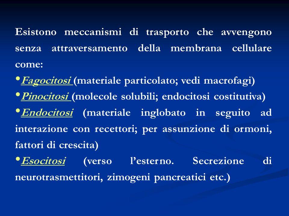 Esistono meccanismi di trasporto che avvengono senza attraversamento della membrana cellulare come: