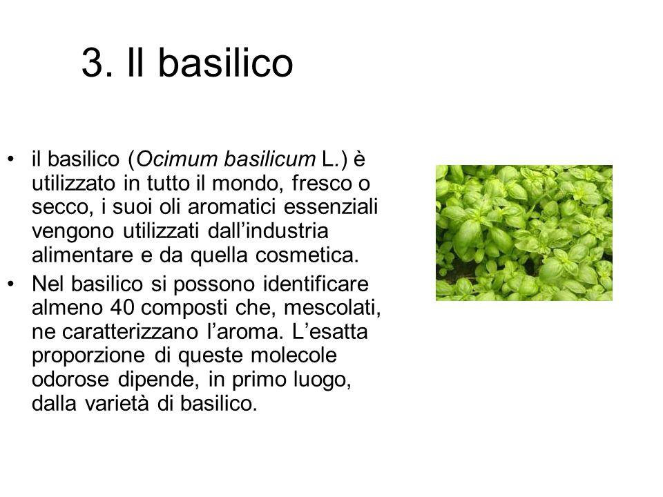 3. Il basilico