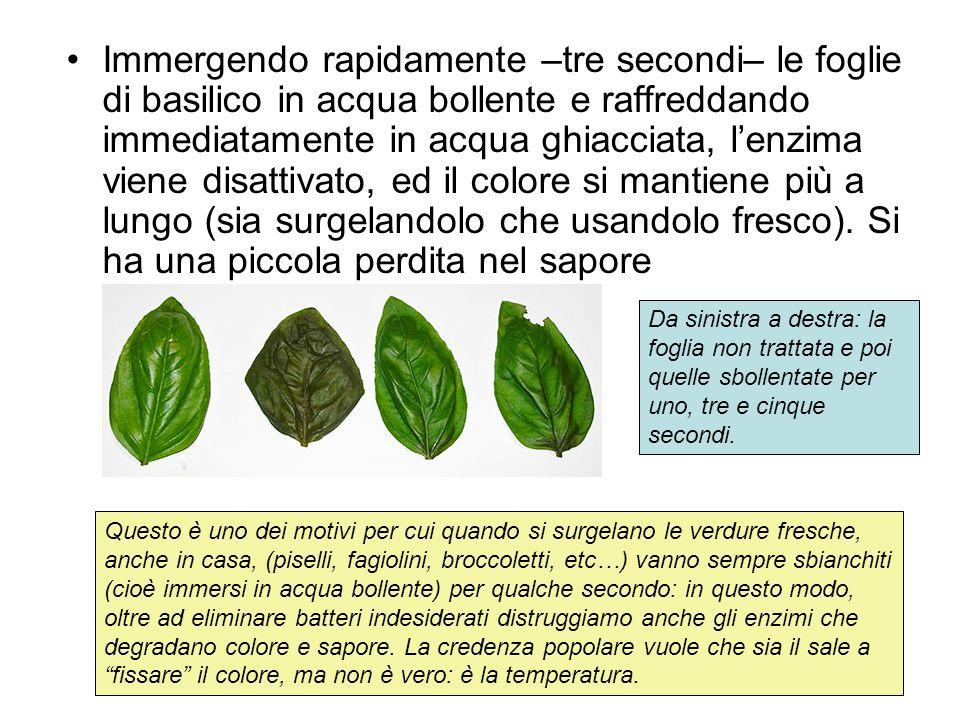 Immergendo rapidamente –tre secondi– le foglie di basilico in acqua bollente e raffreddando immediatamente in acqua ghiacciata, l'enzima viene disattivato, ed il colore si mantiene più a lungo (sia surgelandolo che usandolo fresco). Si ha una piccola perdita nel sapore