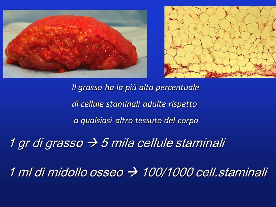1 gr di grasso  5 mila cellule staminali