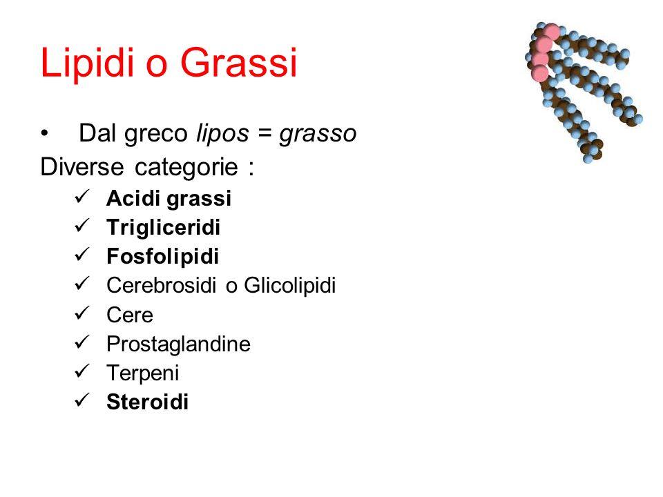 Lipidi o Grassi Dal greco lipos = grasso Diverse categorie :