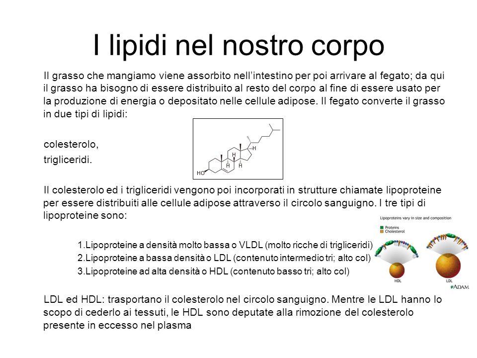 I lipidi nel nostro corpo