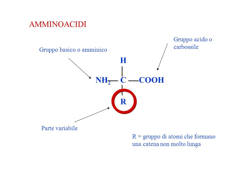 AMMINOACIDI COOH H NH2 C R Gruppo acido o carbossile