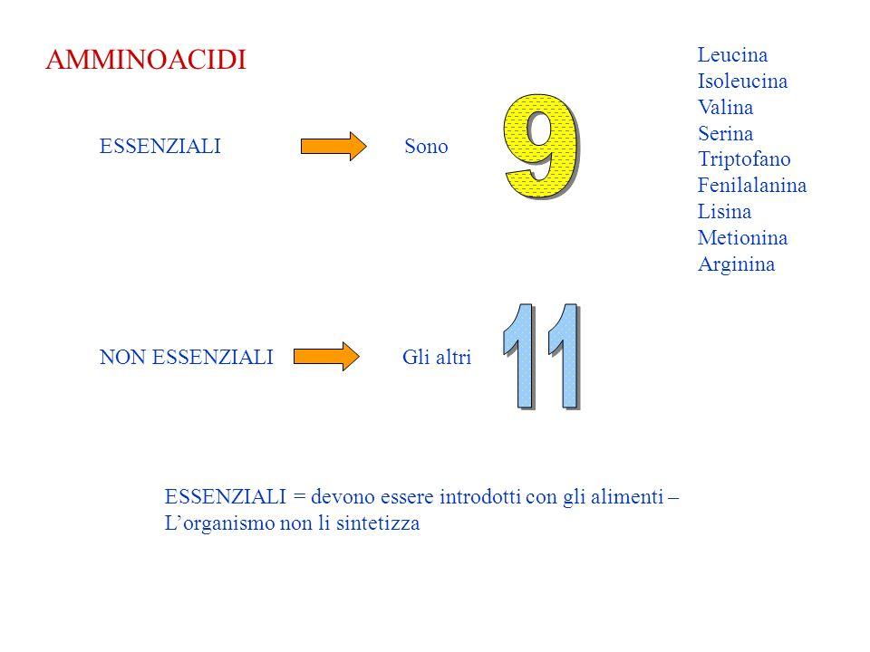 9 11 AMMINOACIDI Leucina Isoleucina Valina Serina Triptofano