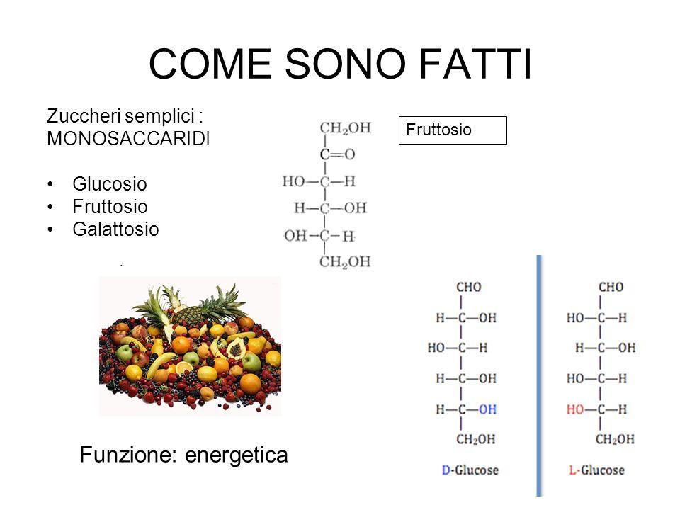 COME SONO FATTI Funzione: energetica Zuccheri semplici : MONOSACCARIDI