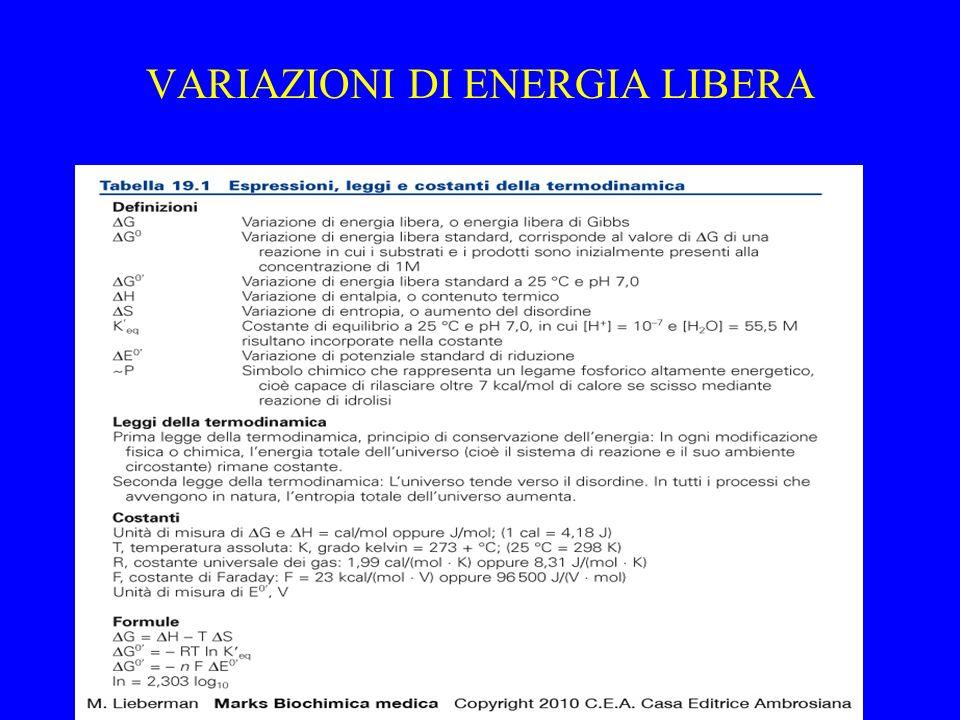 VARIAZIONI DI ENERGIA LIBERA