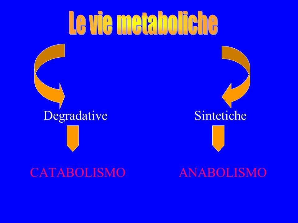 Le vie metaboliche Degradative Sintetiche.