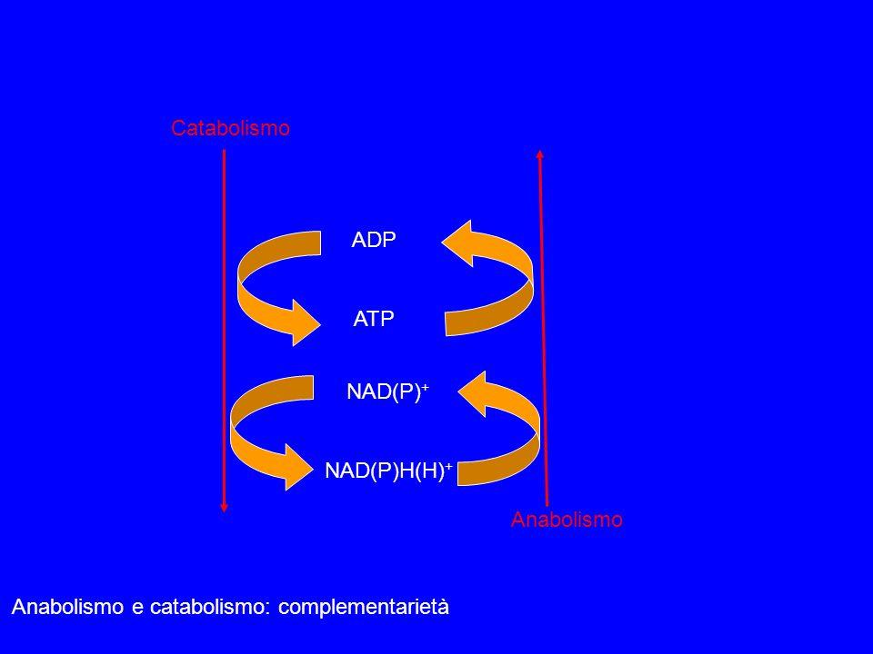 Anabolismo e catabolismo: complementarietà