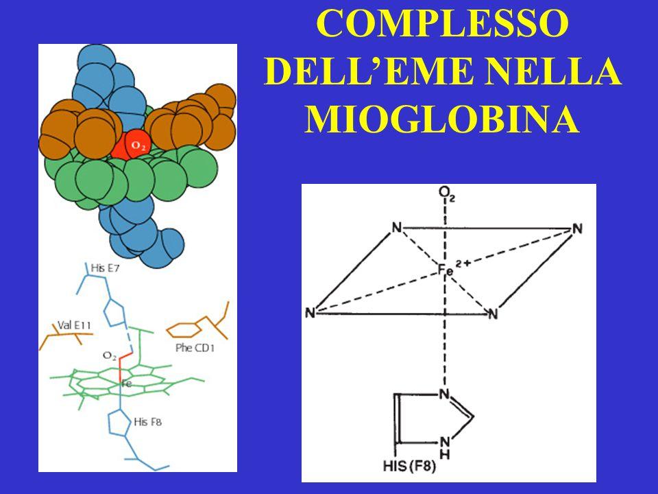 COMPLESSO DELL'EME NELLA MIOGLOBINA