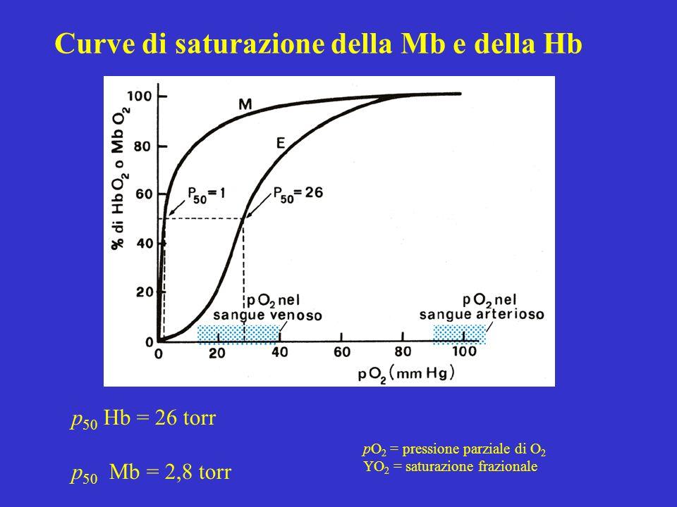 Curve di saturazione della Mb e della Hb