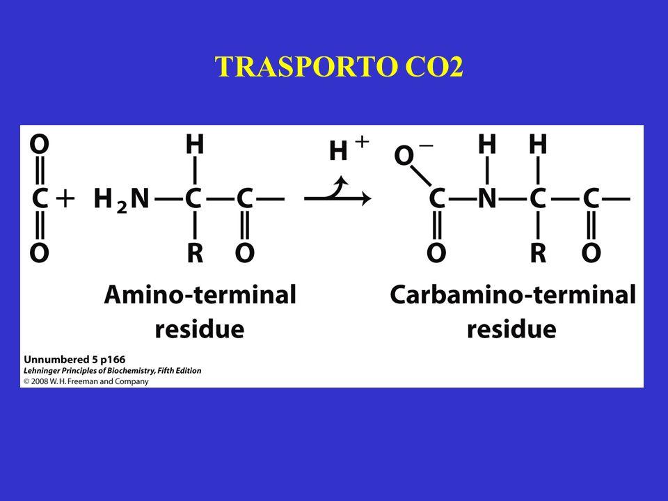 TRASPORTO CO2