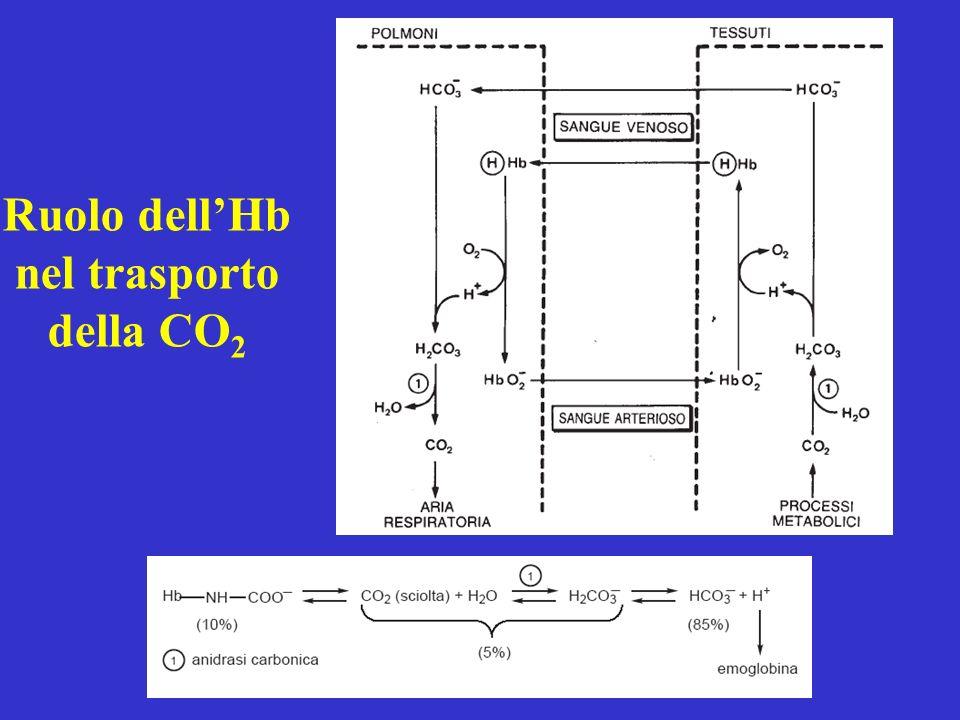 Ruolo dell'Hb nel trasporto della CO2