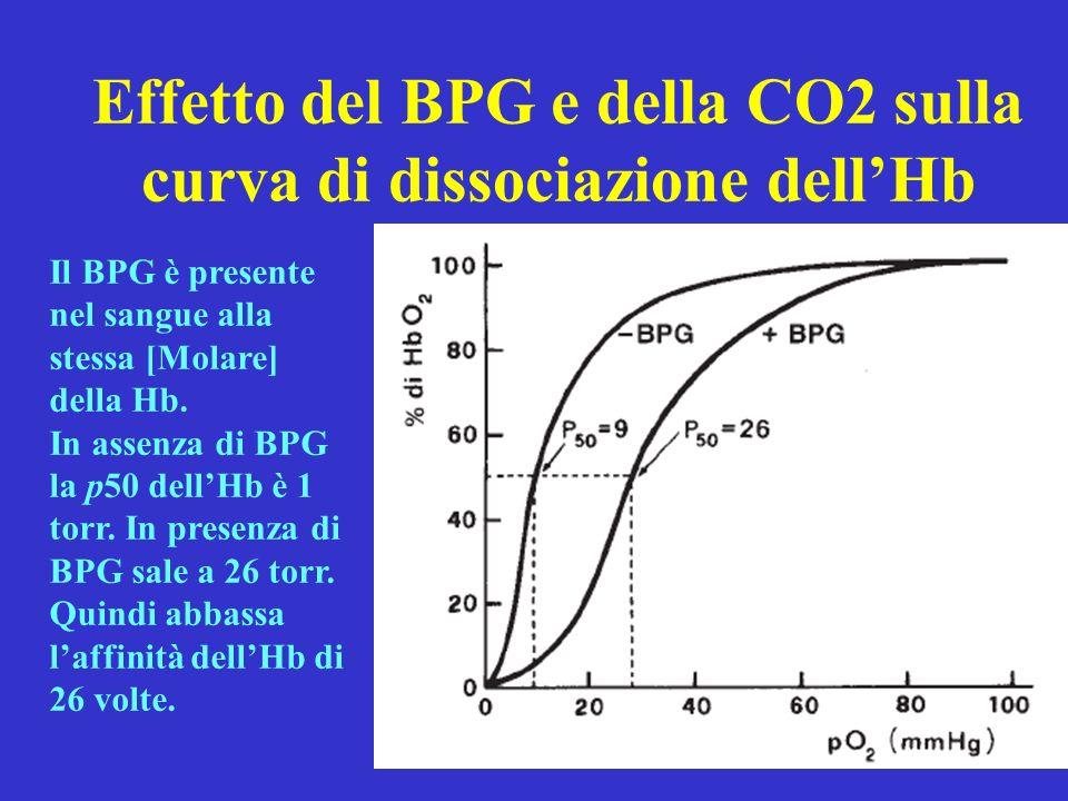 Effetto del BPG e della CO2 sulla curva di dissociazione dell'Hb