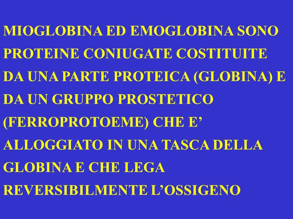 MIOGLOBINA ED EMOGLOBINA SONO PROTEINE CONIUGATE COSTITUITE DA UNA PARTE PROTEICA (GLOBINA) E DA UN GRUPPO PROSTETICO (FERROPROTOEME) CHE E' ALLOGGIATO IN UNA TASCA DELLA GLOBINA E CHE LEGA REVERSIBILMENTE L'OSSIGENO