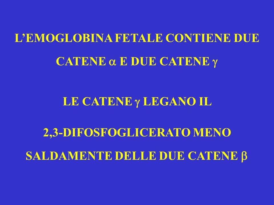 L'EMOGLOBINA FETALE CONTIENE DUE CATENE  E DUE CATENE 