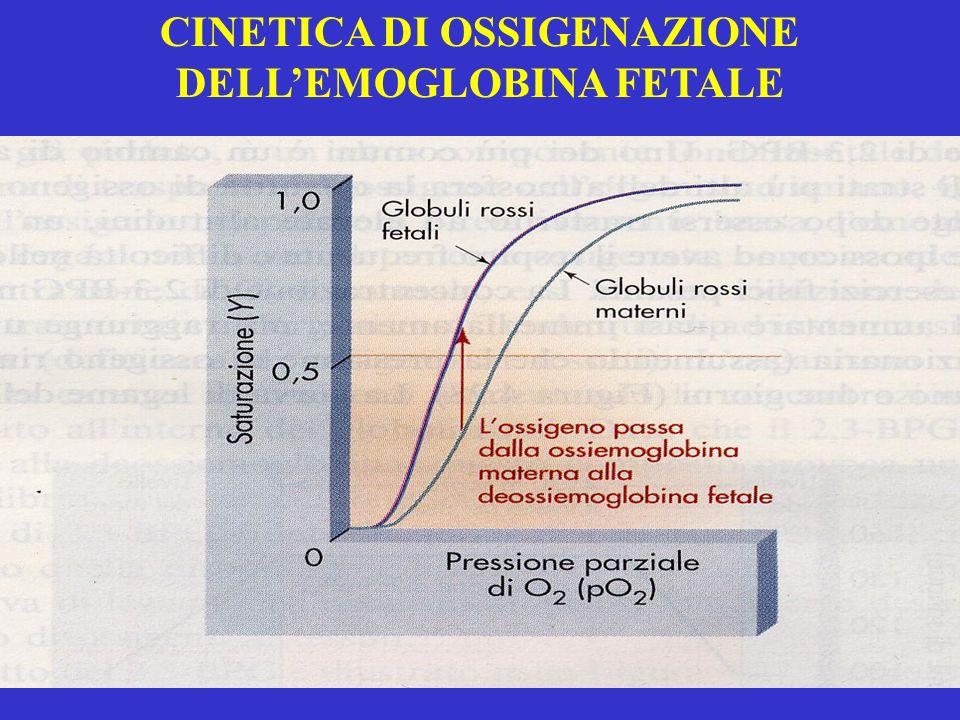 CINETICA DI OSSIGENAZIONE DELL'EMOGLOBINA FETALE
