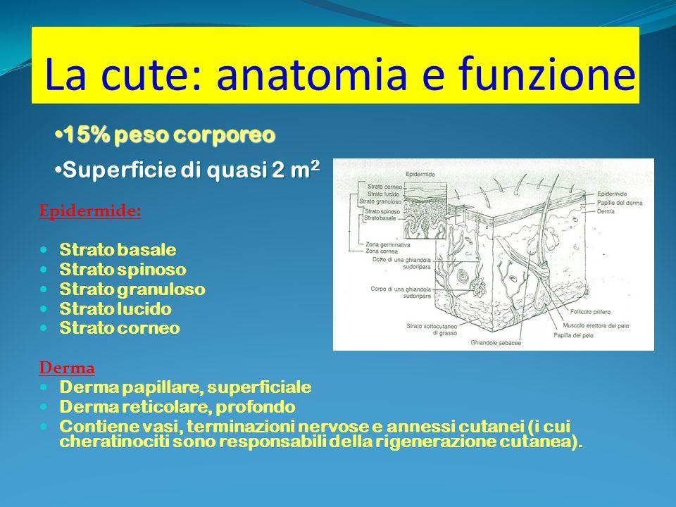 La cute: anatomia e funzione