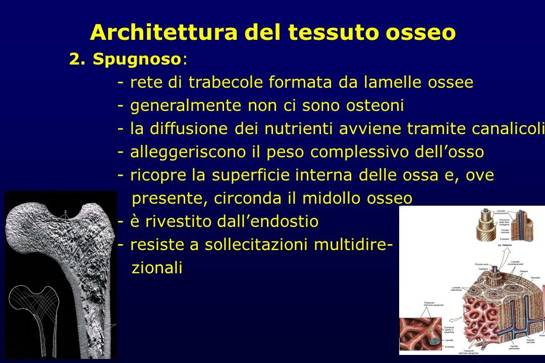 Architettura del tessuto osseo