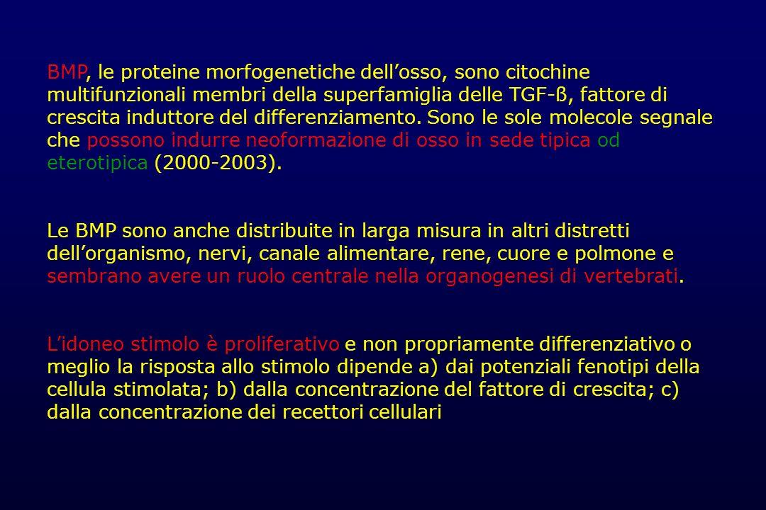 BMP, le proteine morfogenetiche dell'osso, sono citochine multifunzionali membri della superfamiglia delle TGF-ß, fattore di crescita induttore del differenziamento. Sono le sole molecole segnale che possono indurre neoformazione di osso in sede tipica od eterotipica (2000-2003).