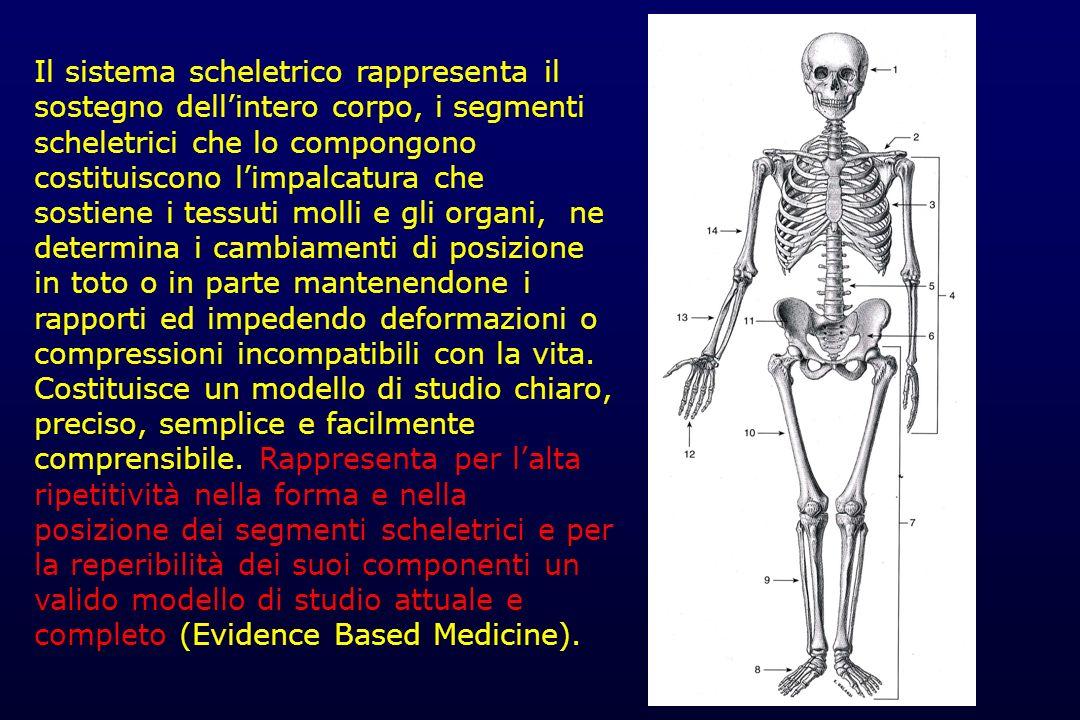 Il sistema scheletrico rappresenta il sostegno dell'intero corpo, i segmenti scheletrici che lo compongono costituiscono l'impalcatura che sostiene i tessuti molli e gli organi, ne determina i cambiamenti di posizione in toto o in parte mantenendone i rapporti ed impedendo deformazioni o compressioni incompatibili con la vita.