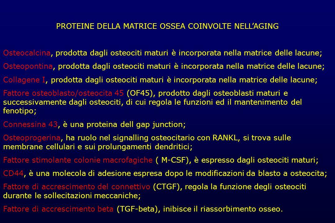 PROTEINE DELLA MATRICE OSSEA COINVOLTE NELL'AGING