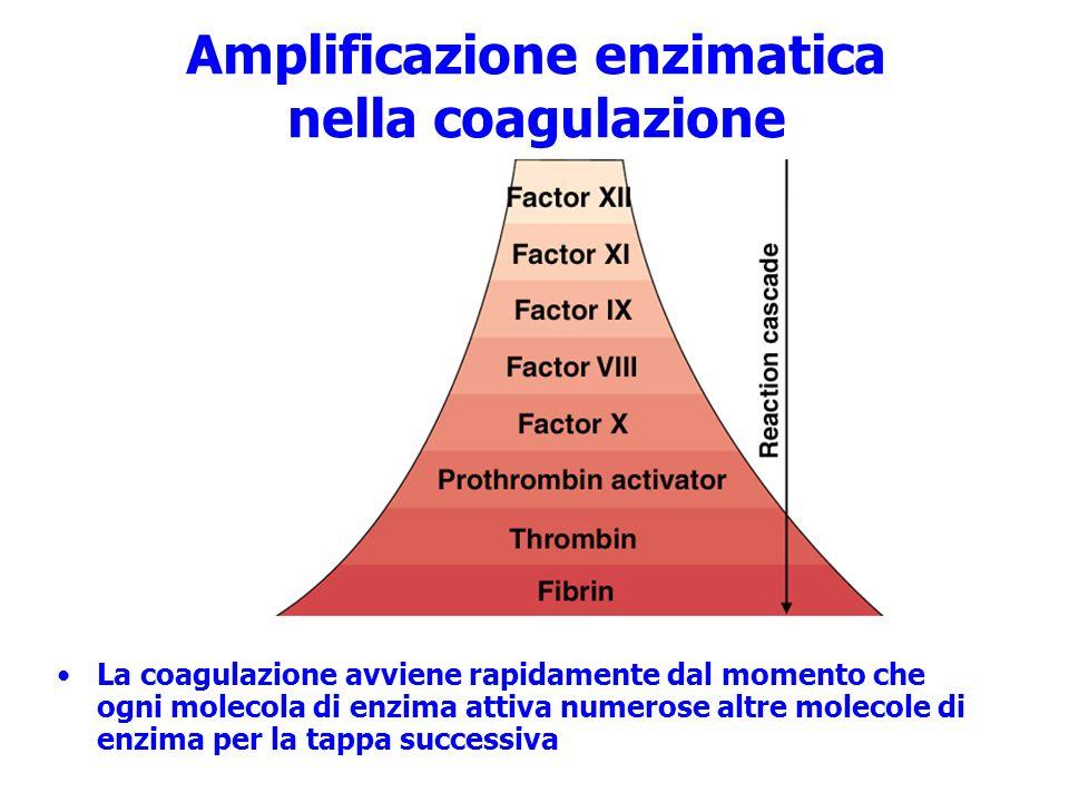 Amplificazione enzimatica nella coagulazione