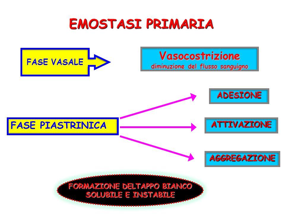 EMOSTASI PRIMARIA Vasocostrizione diminuzione del flusso sanguigno