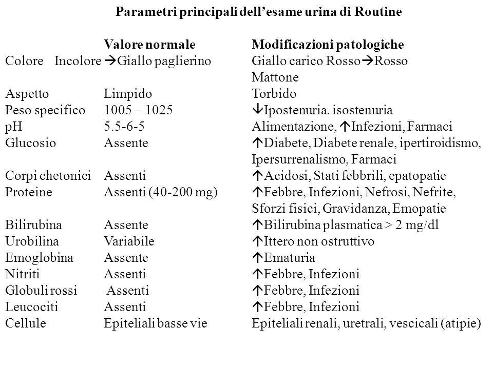 Parametri principali dell'esame urina di Routine