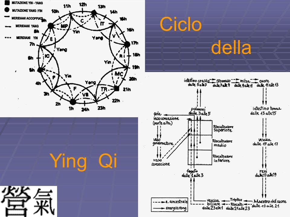 Ciclo della Ying Qi