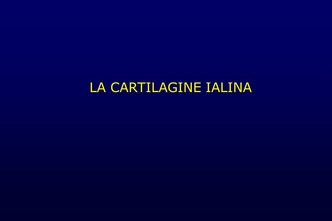 LA CARTILAGINE IALINA