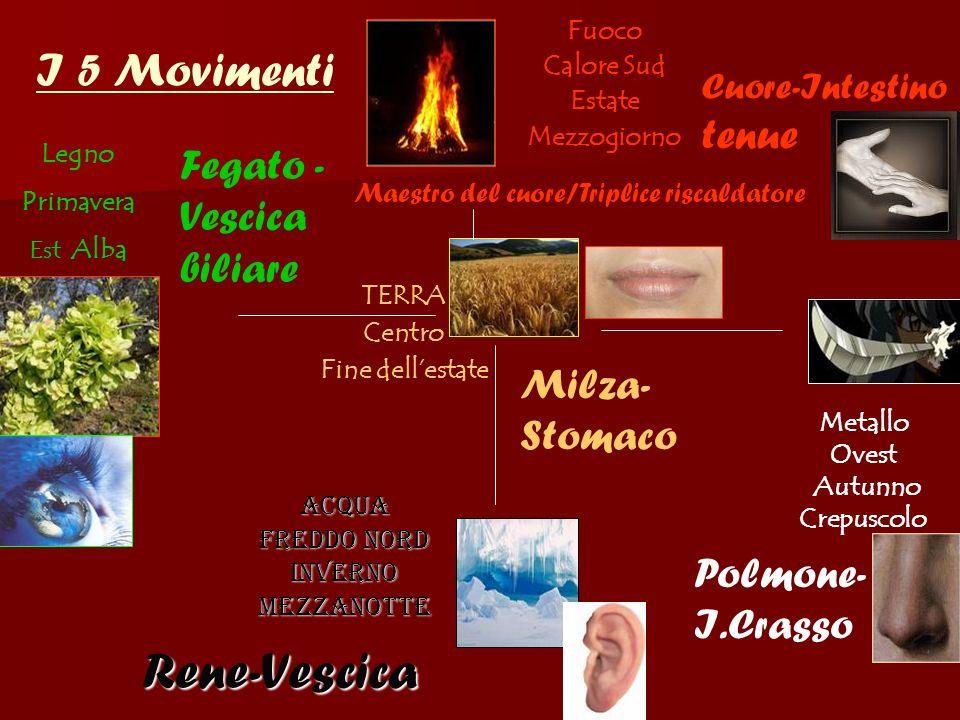 Rene-Vescica I 5 Movimenti Fegato -Vescica biliare Milza-Stomaco