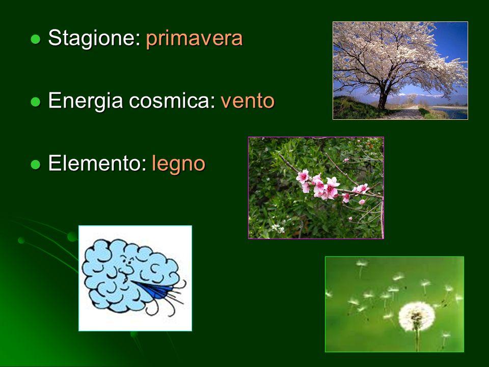 Stagione: primavera Energia cosmica: vento Elemento: legno