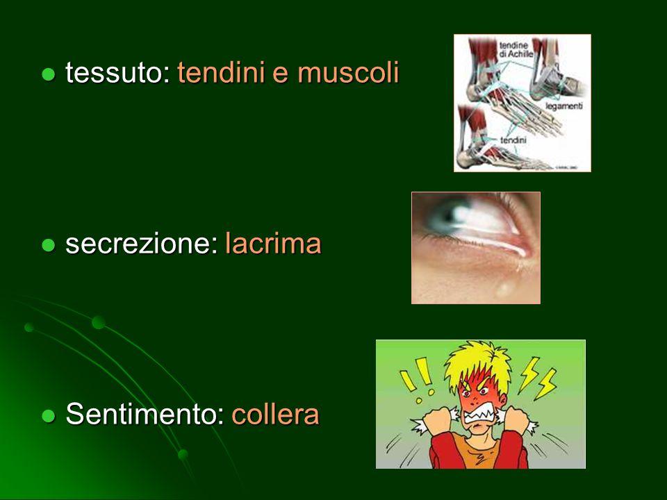 tessuto: tendini e muscoli