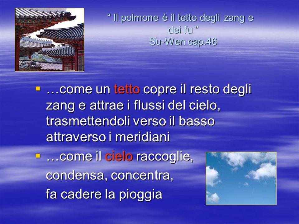 Il polmone è il tetto degli zang e dei fu Su-Wen cap.46