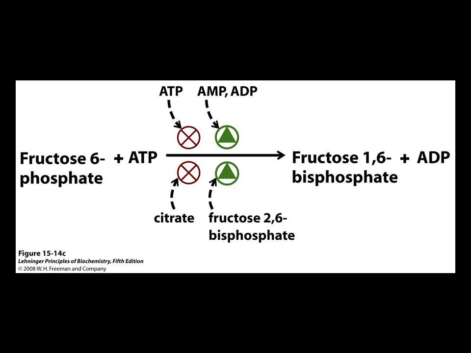 FIGURE 15-14c Phosphofructokinase-1 (PFK-1) and its regulation