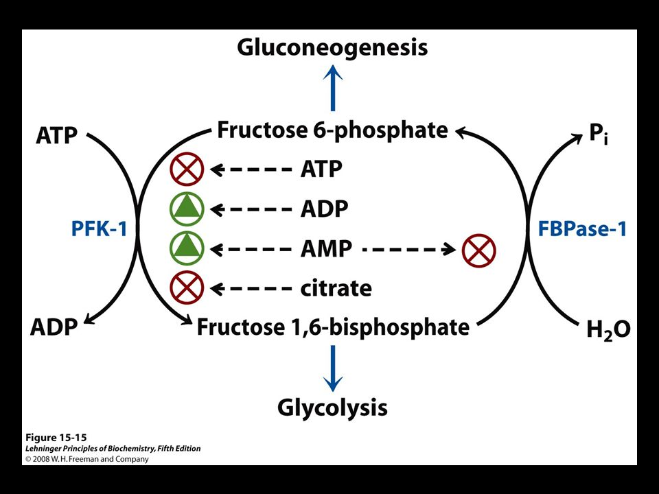 FIGURE Regulation of fructose 1,6-bisphosphatase (FBPase-1) and phosphofructokinase-1 (PFK-1).
