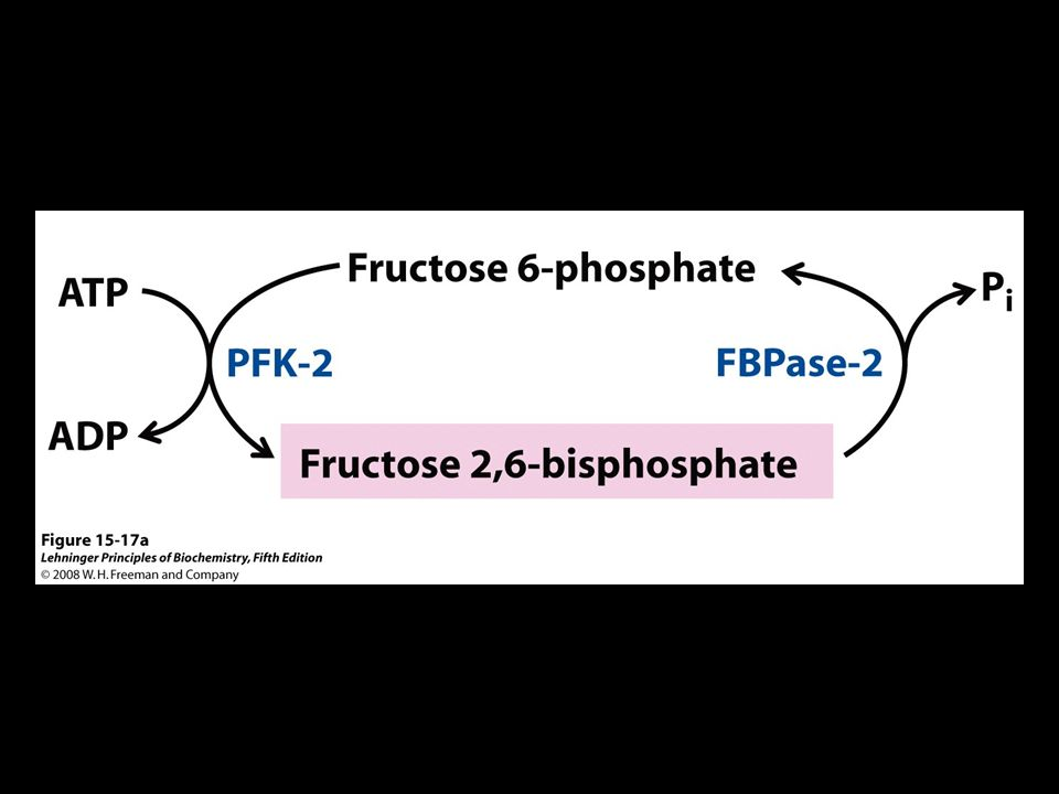 FIGURE 15-17a Regulation of fructose 2,6-bisphosphate level