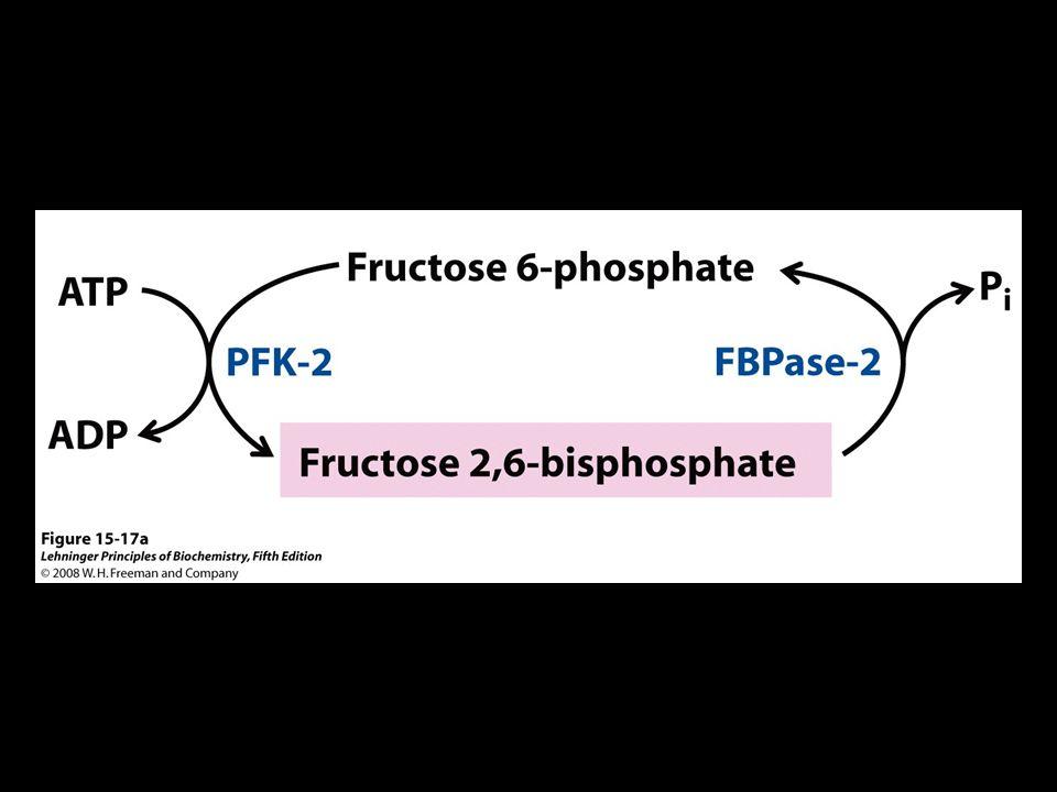FIGURE 15-17a Regulation of fructose 2,6-bisphosphate level