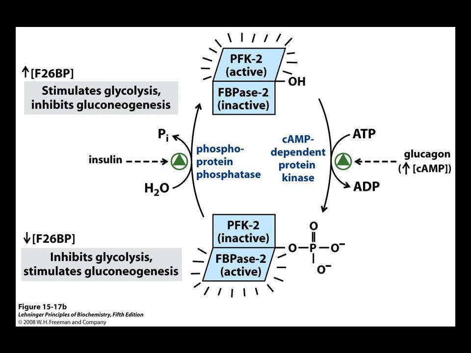 FIGURE 15-17b Regulation of fructose 2,6-bisphosphate level