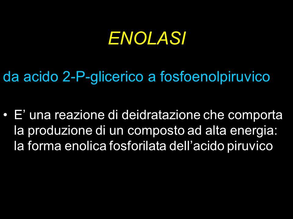 ENOLASI da acido 2-P-glicerico a fosfoenolpiruvico