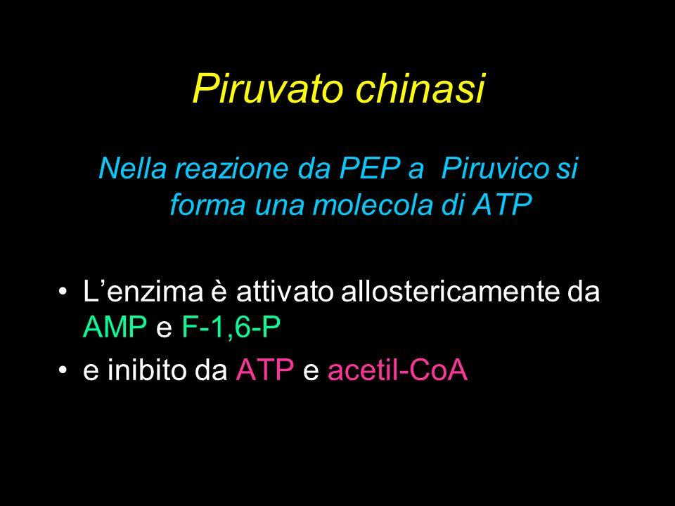 Nella reazione da PEP a Piruvico si forma una molecola di ATP