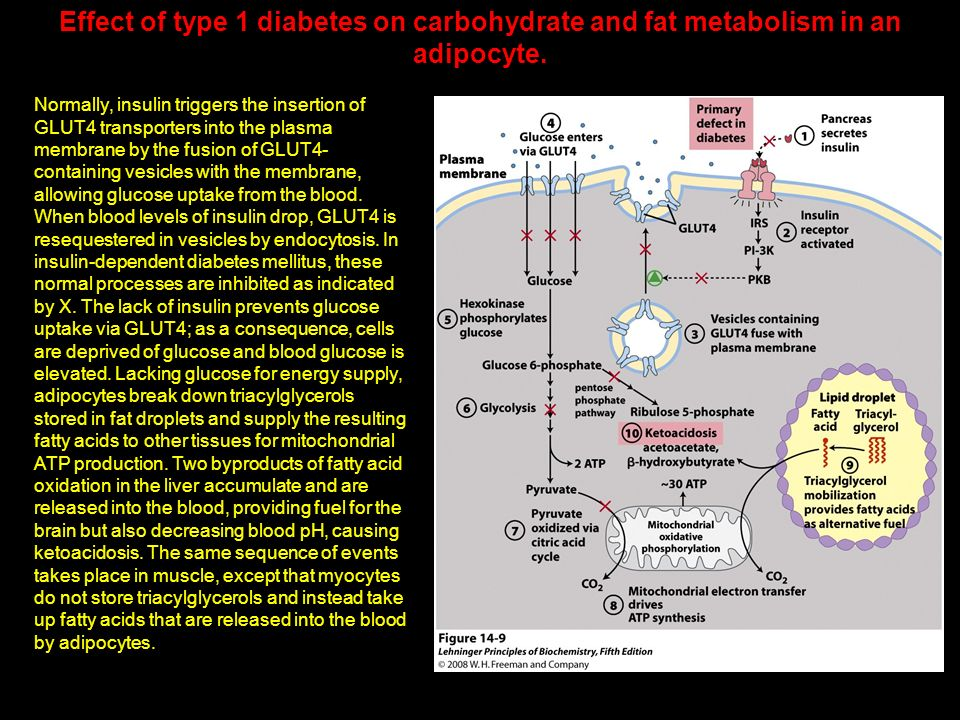 Effect of type 1 diabetes on carbohydrate and fat metabolism in an adipocyte.
